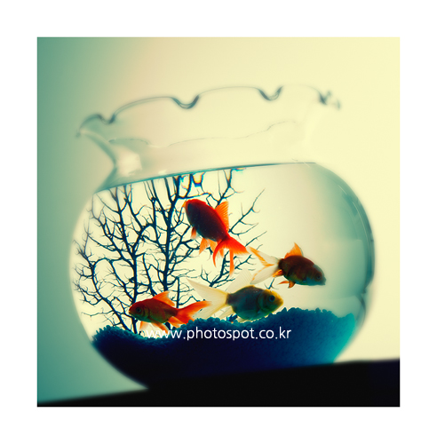 collection_008_03.png
