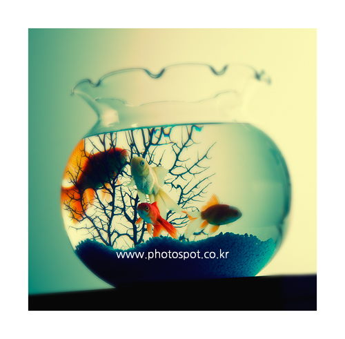 collection_008_01.png