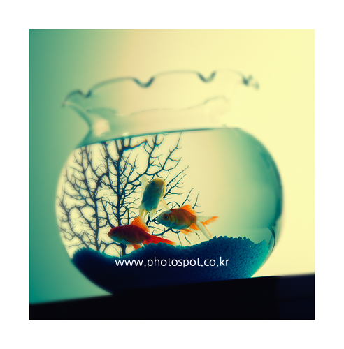 collection_008_11.png