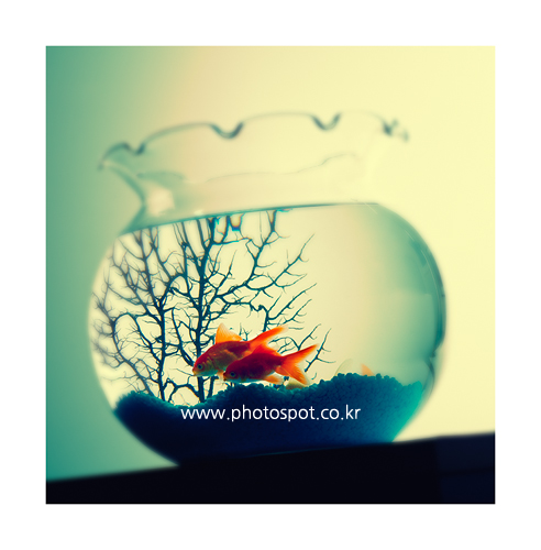 collection_008_06.png