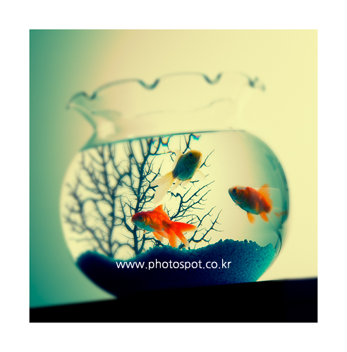 collection_008_12.png