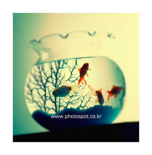 collection_008_07.png